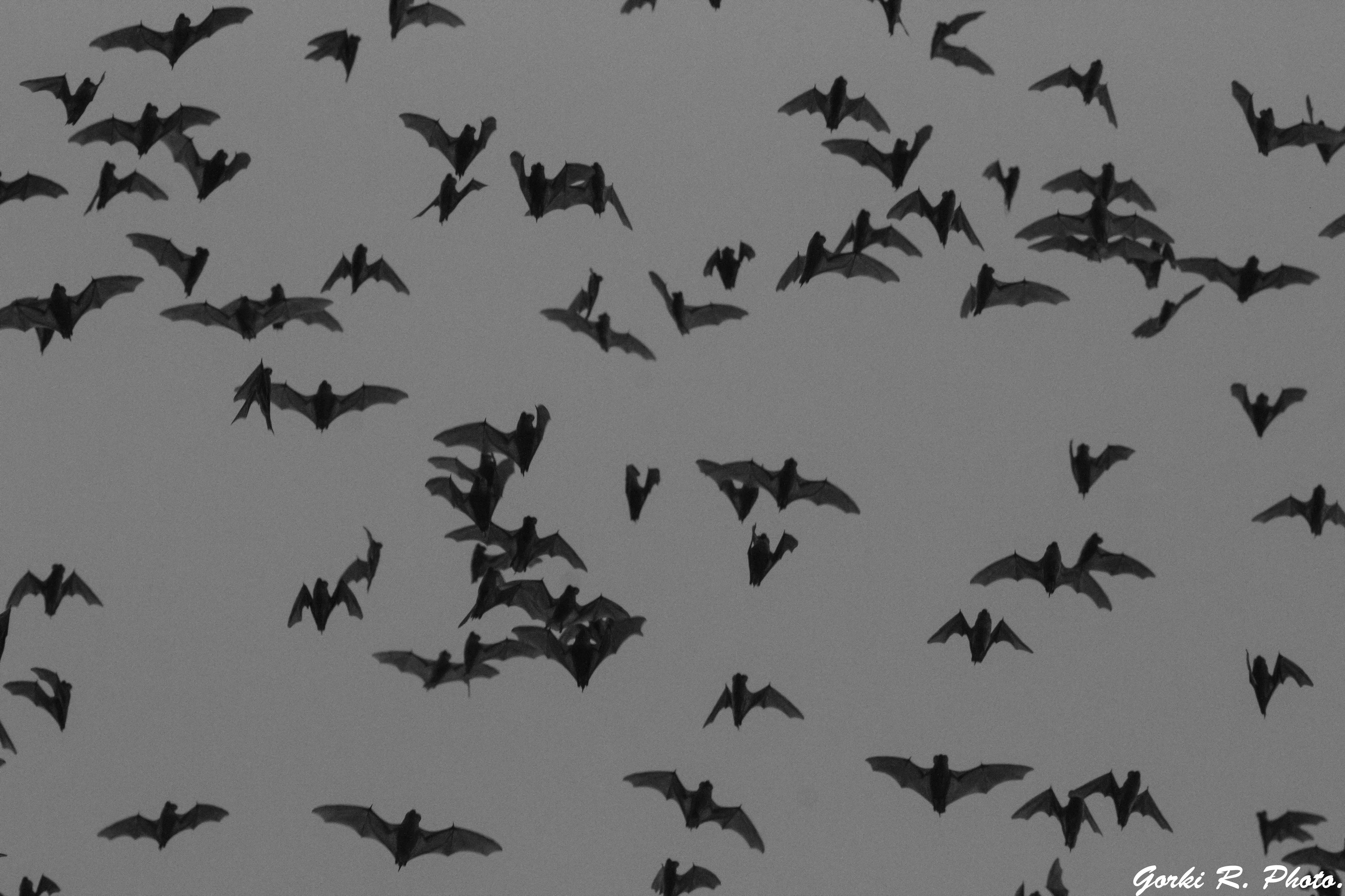Tras la huella de los murciélagos.